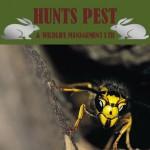 Hunts Pest