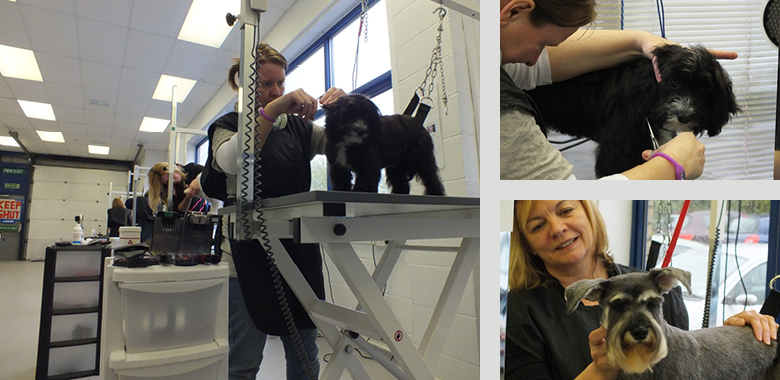 Dog Grooming School Manchester