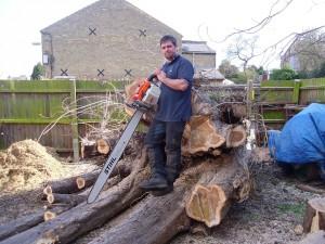 MJC Tree Care 1